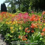 Location: RHS Harlow Carr, Yorkshire, UKDate: 2017-06-17In the streamside garden