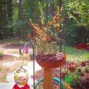 Location: Louisa, VADate: 6-20-17My hummingbirds still prefer the syrup to my Vermilllion Firecrac