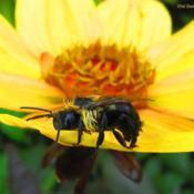 Location: central IllinoisDate: 2014-10-02#pollination   (after a brief rain)