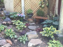 Thumb of 2017-06-27/SpringGreenThumb/5b12f7