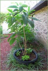 Thumb of 2017-06-30/beckygardener/527eee