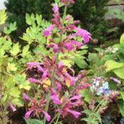Location: my garden zone 7A Cape Cod, MADate: 2017-07-01New plant