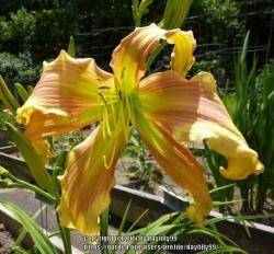 Thumb of 2017-07-21/daylilly99/e49d32