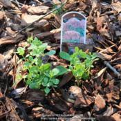 Location: Flowery Branch, GADate: 2017-07-30Young Plant with Emerging Growth