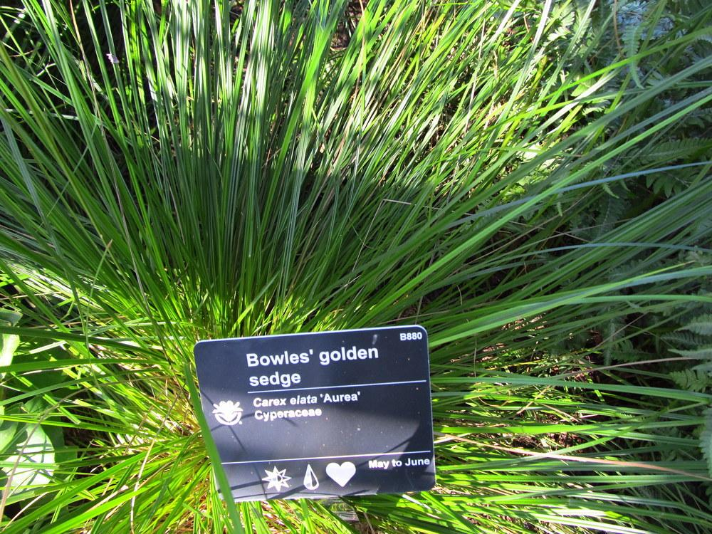 Sedges Plant Care and Collection of Varieties Gardenorg
