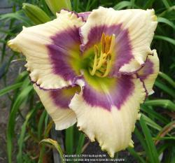 Thumb of 2017-09-14/daylilly99/e7a52a