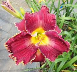Thumb of 2017-09-14/daylilly99/ef3de0