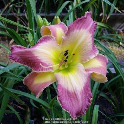 Thumb of 2017-09-14/daylilly99/f3c5a3