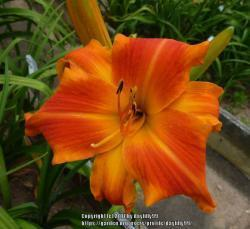 Thumb of 2017-09-17/daylilly99/36c7cd