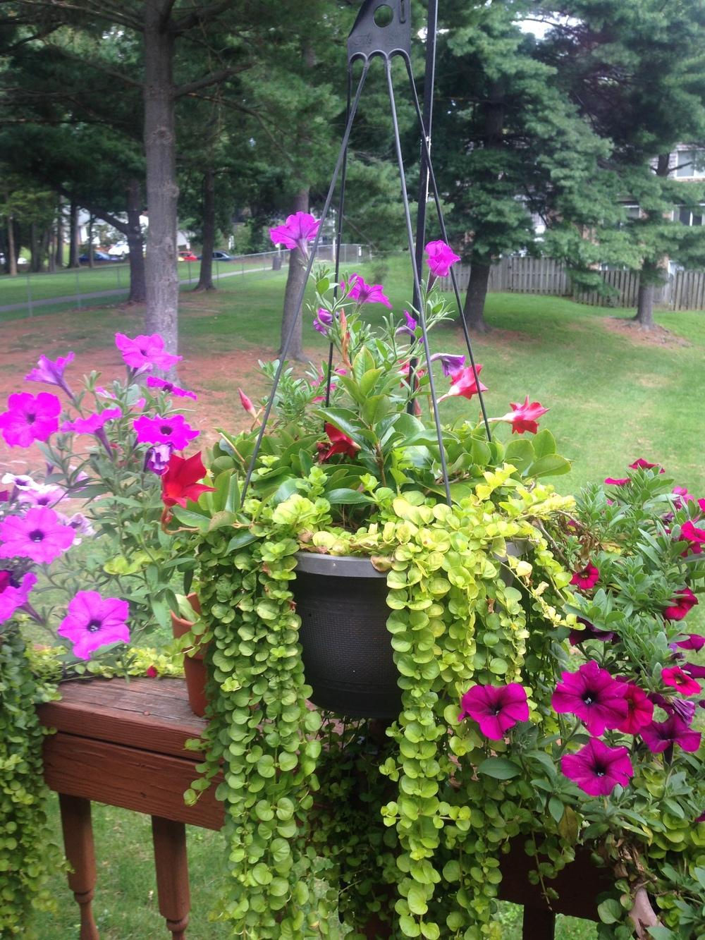ask a question forum starting a home based gardening business. Black Bedroom Furniture Sets. Home Design Ideas