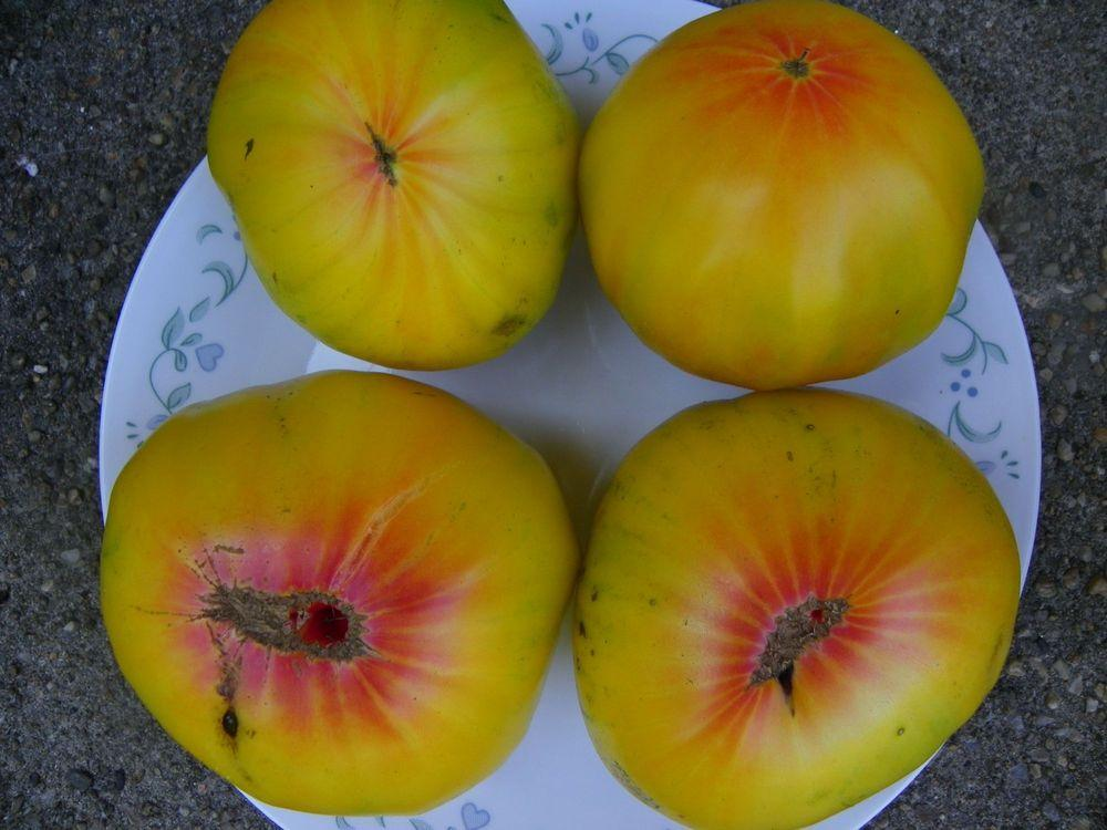 Photo of Tomato (Solanum lycopersicum 'Big Rainbow') uploaded by Newyorkrita