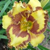 Location: Grand Kids Daylily Farm, Union, MSDate: springRussell Guidry