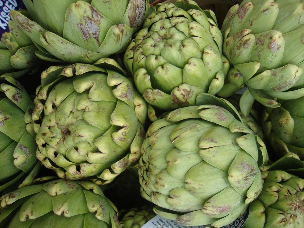 Photo of Artichokes (Cynara scolymus) uploaded by Paul2032