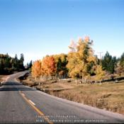 Location: Road to Las Cruces, NMDate: October 1964Beautiful fall color!