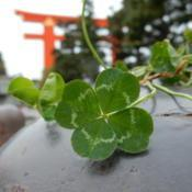 Location: Kyoto, JapanDate: 2017-04-20wishing for a lucky day