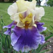 Location: New Lots - Delphi, Indianabloom is purple - photo looks blue
