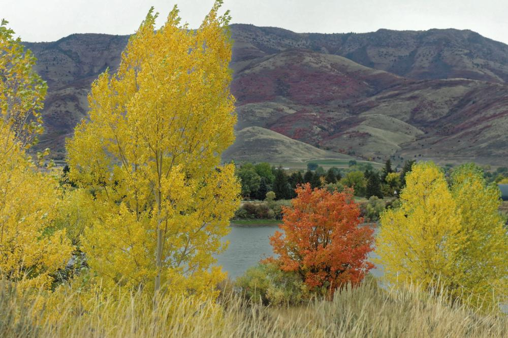 Photo of Quaking Aspen (Populus tremuloides) uploaded by dirtdorphins