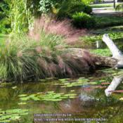Location: Mckee Botanical Gardens, Vero Beach, FloridaDate: 2016-11-06