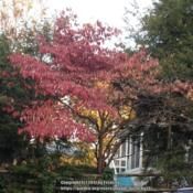 Location: In my neighborhood, Falls Church, VADate: 2017-11-13
