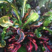 Location: Longwood Gardens Conservatory, Kennett Square, Pennsylvania USADate: 2017-11-17