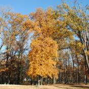 Location: Smyrna Rest Station off Rt #1 in DelawareDate: 2016-11-18full-grown upright tree in middle