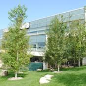 Location: College of DuPage in Glen Ellyn, ILDate: August 2014several planted trees in a landscape