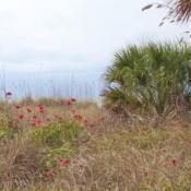 Location: St Pete Beach, FloridaDate: 2011-01-22invasive