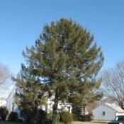 Location: Downingtown, PennsylvaniaDate: 2007-02-03a lone full-grown tree