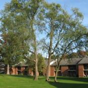Location: West Chester, PennsylvaniaDate: 2008-10-13three trees together