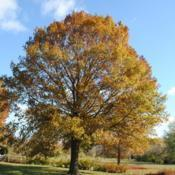 Location: Downingtown, PennsylvaniaDate: 2010-11-06autumn color