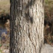 Location: near West Chester, PennsylvaniaDate: 2010-11-10lower portion of trunk