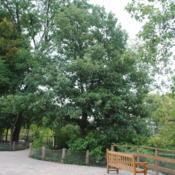 Location: Cosley Park in Wheaton, IllinoisDate: 2014-08-19maturing planted tree in little zoo