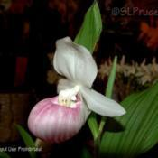 Location: Palm Sunday Orchid Show, MIDate: 2006-04-09