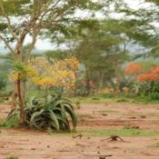 Location: South Ethiopia, near TurmiDate: 2008-10-20