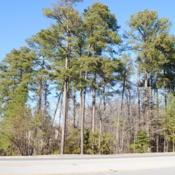Location: Williamsburg, VirginiaDate: 2013-03-04a group of wild trees