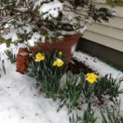 Location: In my garden, Falls Church, VADate: 2014-03-25