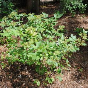 a young shrub maturing