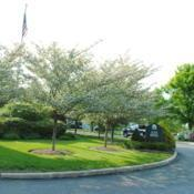 Location: Newtown Square, PennsylvaniaDate: 2011-05-13curving line of trees in bloom