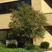 Location: DeKalb, IllinoisDate: September in the 1980'stree at a building foundation