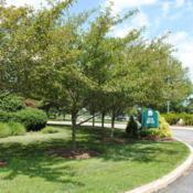 Location: Newtown Square, PennsylvaniaDate: 2010-07-27a curving line of maturing trees
