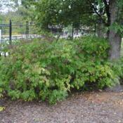 Location: Cosley Zoo in Wheaton, IllinoisDate: 2014-08-19some shrubs in summer