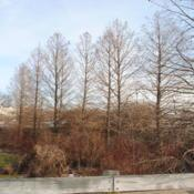 Location: Downingtown, PennsylvaniaDate: 2013-01-03line of trees in winter at shopping center