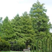 Location: Longwood Gardens in southeast PennsylvaniaDate: 2014-10-03mass of trees