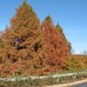 Location: Downingtown, PennsylvaniaDate: 2007-11-24trees in fall color
