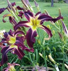 Thumb of 2018-01-15/daylilly99/d90a1d