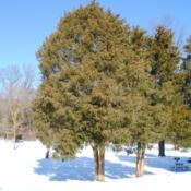 Location: French Creek State Park in southeast PennsylvaniaDate: 2009-12-24a few trees in winter