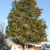 Location: Downingtown, PennsylvaniaDate: 2009-12-20lone tree in yard