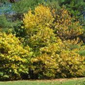 Location: Jenkins Arboretum in Berwyn, PennsylvaniaDate: 2014-10-26plants in fall color