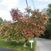 Location: West Chester, PennsylvaniaDate: 2008-10-20beginning of fall color