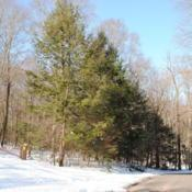 Location: French Creek State Park in southeast PennsylvaniaDate: 2009-12-24line of trees in winter